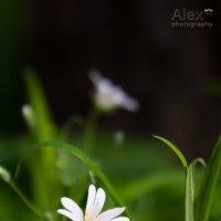 Spring whites :: Aleksandra Rastene