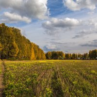 Осеннее поле :: Vadim Piottukh