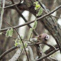 Весна. ... из жизни пернатых. :: Геннадий Александрович