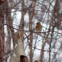 птички :: Наталья Василькова