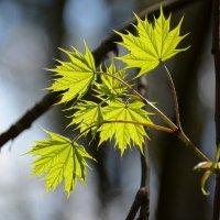 Изумруды весны :: Ксения Соварцева