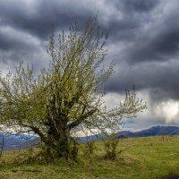 Дерево :: Den SkyWet