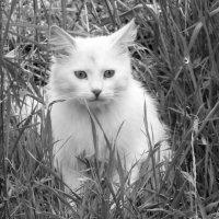 """Приди ко мне, мой хмурый кот"" :: Владимир Ненартонис"