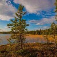 Карелия озеро Шомбозеро :: Владимир Скоробогатько