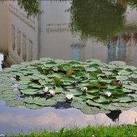 Водяные лилии :: Ольга Ламзина