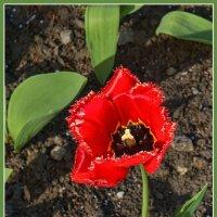 Аленький цветочек :: Юрий Муханов