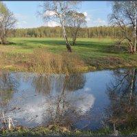 Зеркало для облаков и деревьев :: Виктор Бельцов