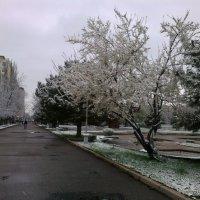 Утренний снег :: Janybek Mukashov