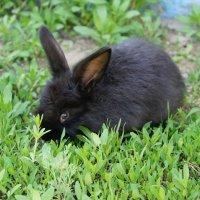 кролики(1) :: Кристина Урманова