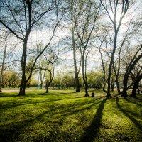 Весна в парке :: Денис Соломахин