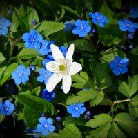 Весенние цветочки :: Наталия Короткова