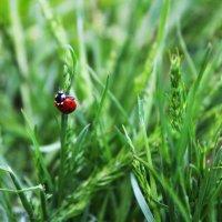 где то в траве... :: АL Medium