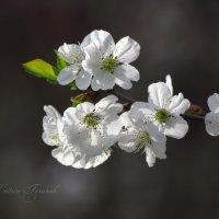 Цвет.... :: Katrin Tararak