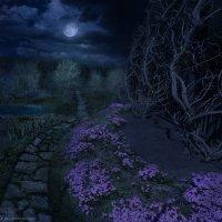 Весенняя ночь на даче :: Boris Belocerkovskij