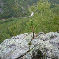 Тяга к жизни или природный бансай :: Георгий Морозов
