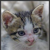 Приблуда-из серии Кошки очарование мое! :: Shmual Hava Retro