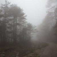 туманное утро :: Евгения Пимченко