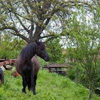 """Редкий вид... лошадь с роскошными """"рогами"""" :: Елена Миронова"""