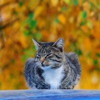 Это мой кот Пунтик, охраняет мою машину :: Анатолий Клепешнёв
