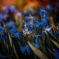 Цветик :: Дмитрий Кудряшов