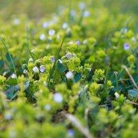 Весна в городе!!! :: Anna Lipatova