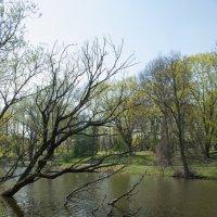 Нижний пруд, Калининград :: Екатерина Калашникова