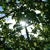 весеннее солнце :: Аня Козлова