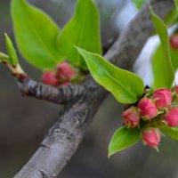 Весна :: Аня Козлова