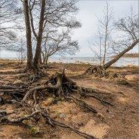 Графская бухта, Финский залив. :: Юрий