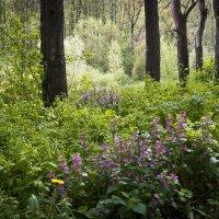 Сказочный лес :: Валентина Белоусова