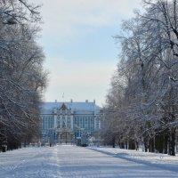 Екатерининский дворец (снято из Александровского парка (январь)) :: Владимир Фомин