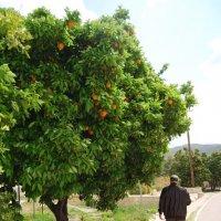 Апельсиновый рай :: Нелли *