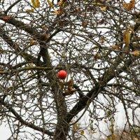 Запретный плод :: юлия паска