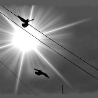 ... к Солнцу... :: Влада Ветрова