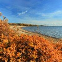 Осень у залива :: Сергей Григорьев