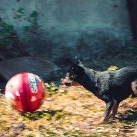 В погоне за мячиком. :: Света Кондрашова