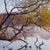 Молодость листвы... :: Roman Lunin