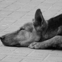 Бездомный.... ;( :: Олександр Никифорчин