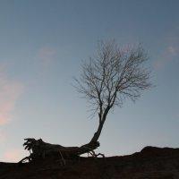 Одинокое дерево :: Сухраб Бекжанов