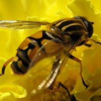 Желтое на желтом :: Маргарита Логинова