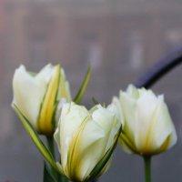 Тюльпаны.... :: Дина Нестерова