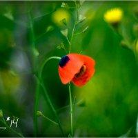 poppys4 :: yameug _