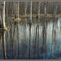 В старый парк пришла весна :: Елена Перевозникова
