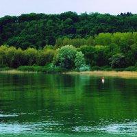 лес, озеро, бакен :: Александр Корчемный