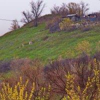 дача на холме - не ищем лёгких путей :: Арсений Корицкий