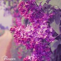 Exotic Flower :: Konstantin Pervov