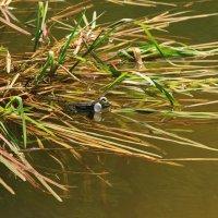 Из жизни лягушек. :: Алина Тазова
