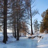 Зима :: Наталья Покацкая