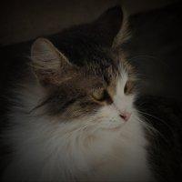 Просто кошка у дома :: Сергей Васильев