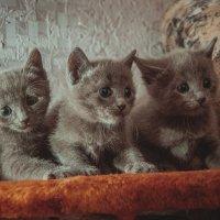 Котята :: Артур Аюпов